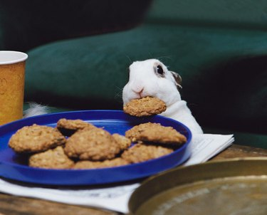 Bunny stealing cookie off plate.