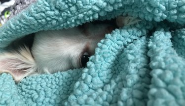 Dog buried under covers