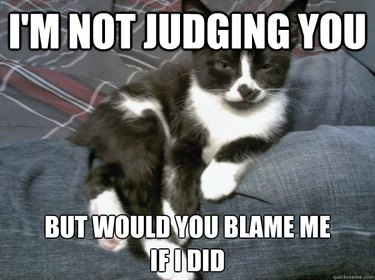 Kitten looking judgmental.
