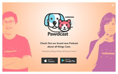 Episode 4: Are Pet Weddings The Cutest Things Ever?
