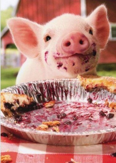 Pig and pie