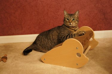 cat on mouse shaped scratcher