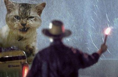 A cat imposed into a Jurassic Park movie still.