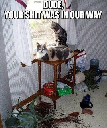 Cats on table surrounded by knocked over potted plants.