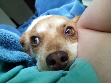 Dog rests chin on bed.