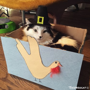 Cat in pilgrim hat sitting in a cardboard box decorated with a turkey