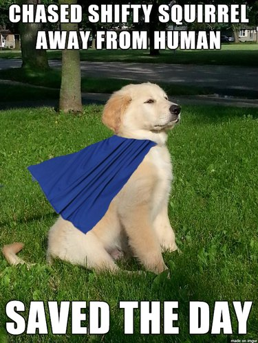 Puppy in a cape.