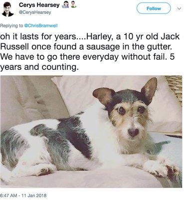 jack russell hoping beyond hope