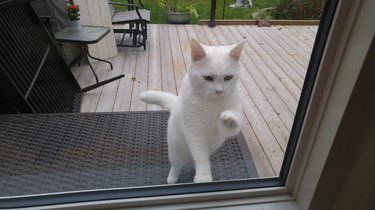 paw-lease let me in