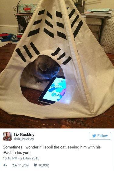 Cat in yurt looking at iPad