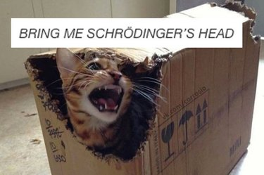 Angry cat in box.