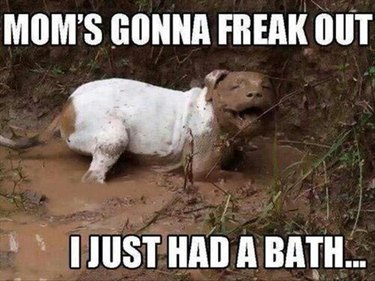 Dog standing in mud.