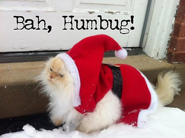Cat dressed up like Santa with text: Bah, Humbug!