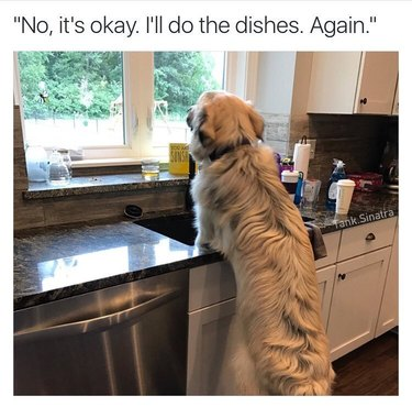 Dog standing at sink.
