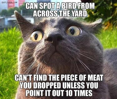 """Cat with text """"Can spot a bird from across the yard. Can't find the piece of meat you dropped unless you point it out 10 times."""""""