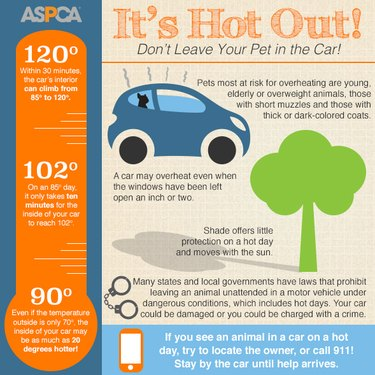 summer hazards to protect your dogs and cats from