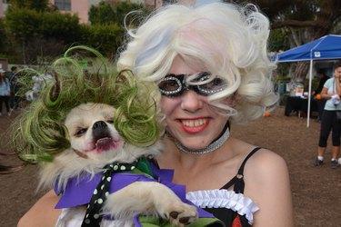 Costumed good boys and good girls make the scene at California pet parade