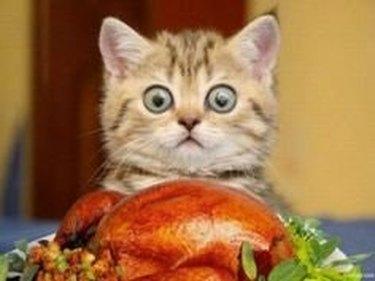 large eyes cat