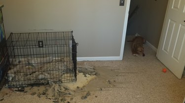 22 Weird Things All Dog Owners Come Home To