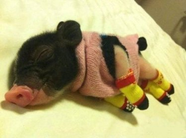 Piglet wearing pink sweater and yellow booties.