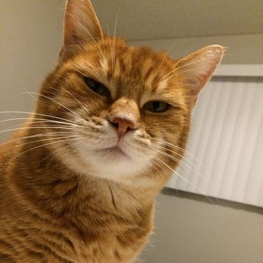 Cat looking judgmental.