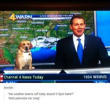 """Dog and weatherman on television. Caption: """"the weather seems ruff today doesn't it Spot haha?"""" """"don't patronize me Greg"""""""