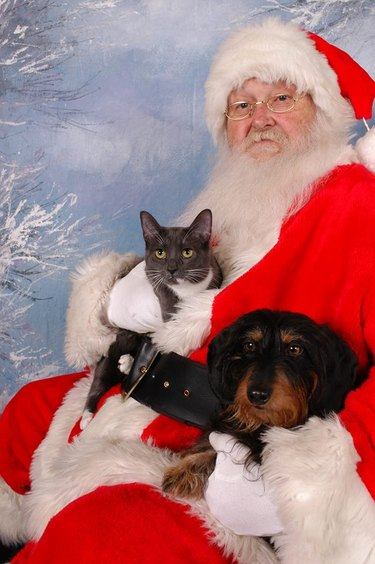 Dog and cat sitting in Santa's lap.