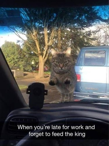 22 Funny Pet Photos You Should Immediately Send To You BFF