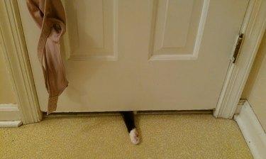 Cat paw sticking out under bathroom door