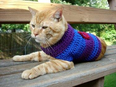 Skeptical orange striped cat wearing sweater.