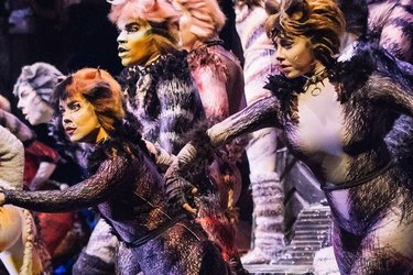 A Service Dog Caused a Scene at 'Cats' on Broadway