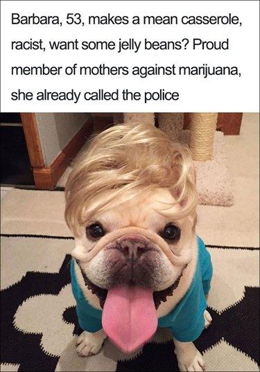 23 ridiculously funny dog bios