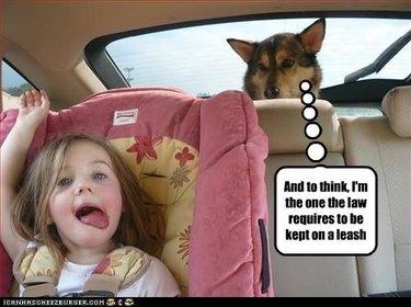 Dog judging little girl in backseat of car.