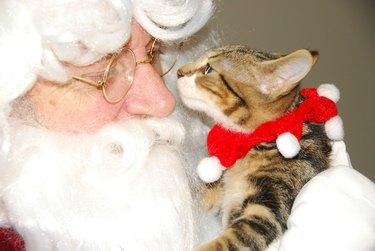Kitten with Santa Claus