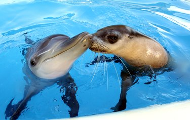 Dolphin and sea lion