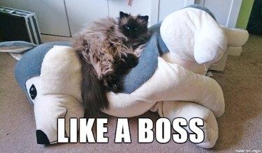 Cat lounging on large dog stuffed animal.