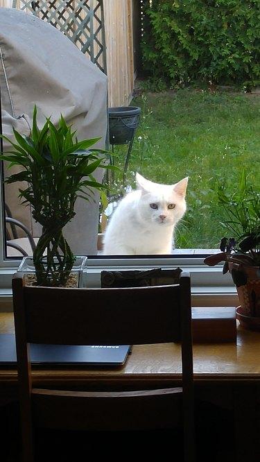 kitty sneaky look