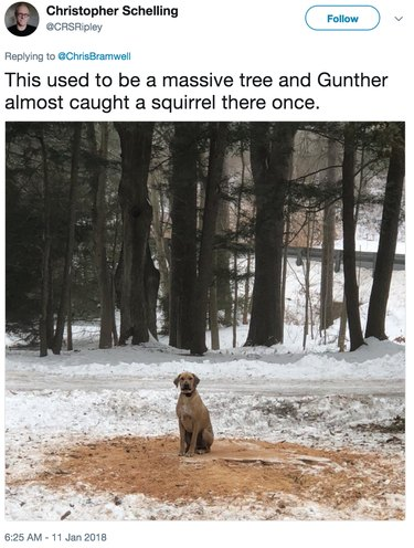 dog in spot where tree and squirrel once were