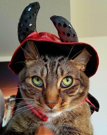 Cat with devil costume