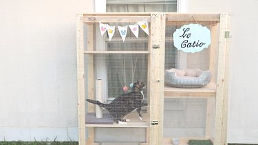 Cat jumping from one shelf to another inside catio