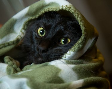 Cat wide awake, wrapped in blanket