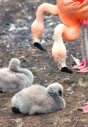greetings from older flamingos