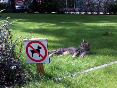 Cat lounging on a lawn next to a sign banning dogs