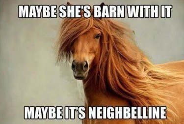 Memes Only People Who Love Horses Will Get
