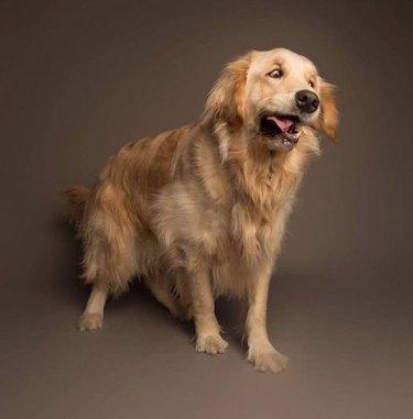 Photo Dog Sneese