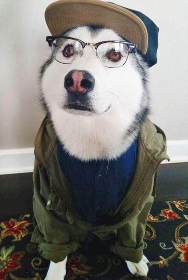 Here Are 16 Very Random and Hilarious Pictures of Animals Guaranteed to Make Your Day Better