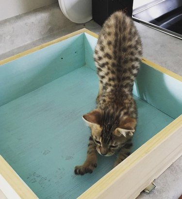 Kitten next to paw prints made on freshly painted surface.