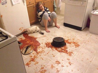 Cat caused a big kitchen mess.