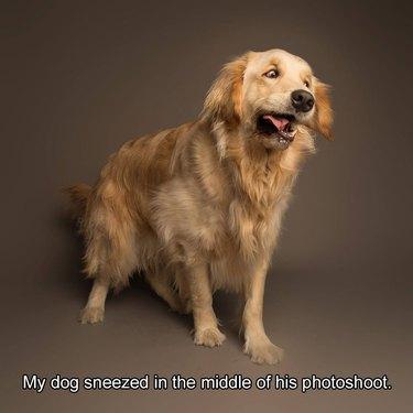 Dog mid-sneeze.