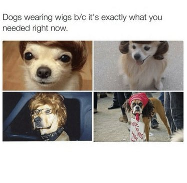 Animals Wearing Things They Should Not Be Wearing